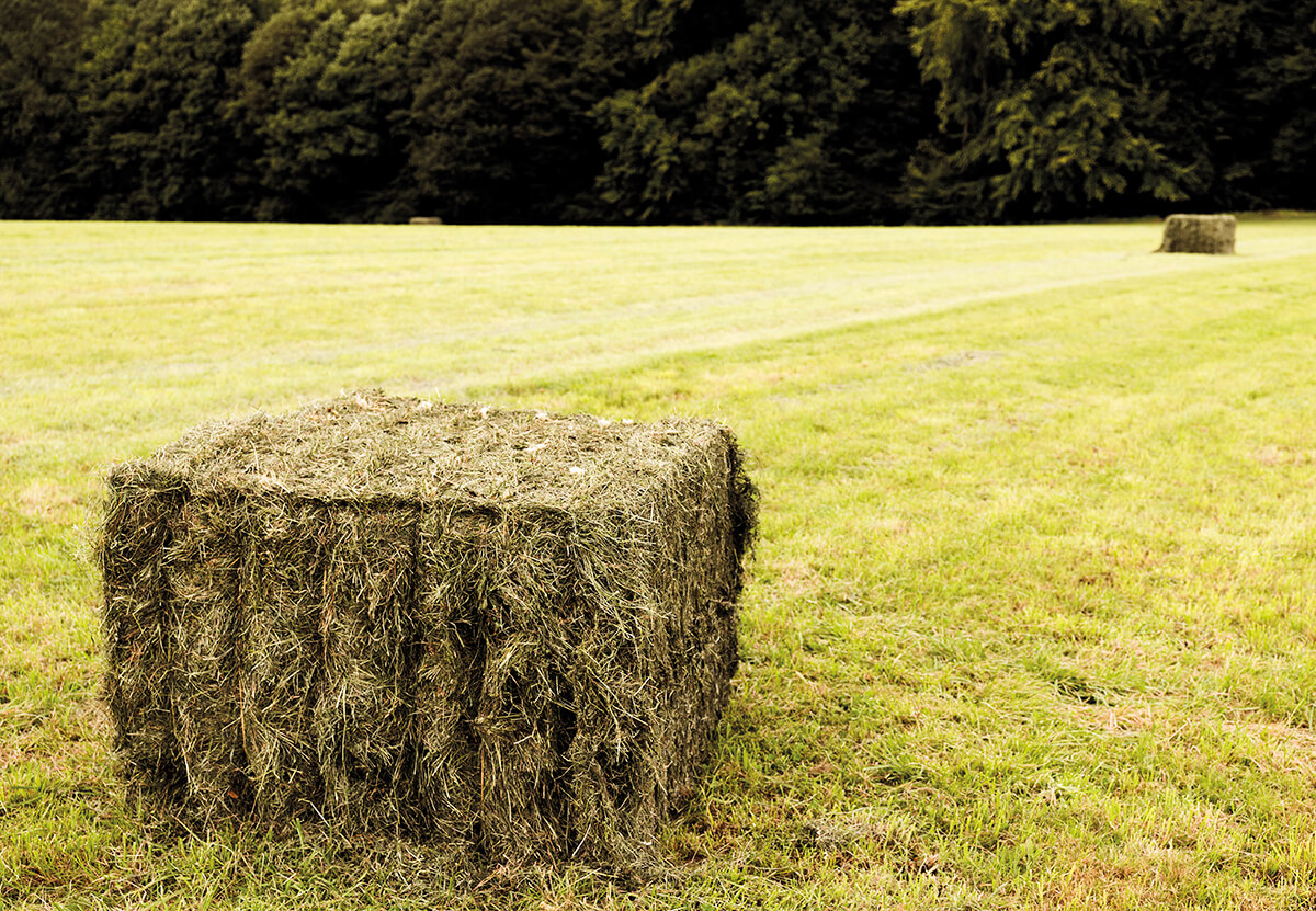 Hay bale tied with knotter