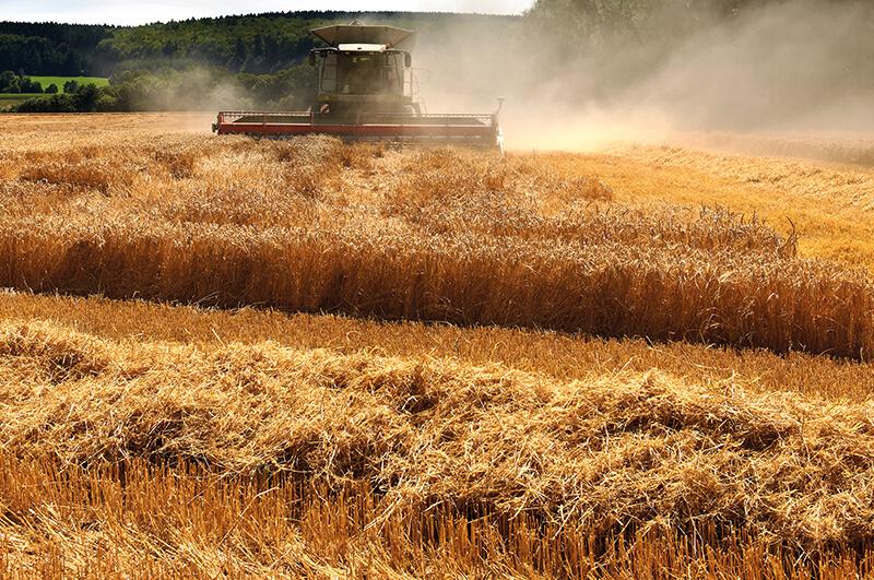 Group Schumacher combine harvesting